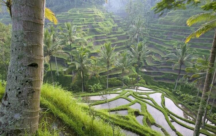 Điểm thăm qua nổi tiếng Tegalalang Rice Terrace ở Ubud
